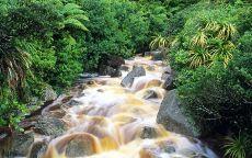 Ручей в джунглях