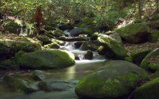 Исток реки