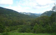 Лес на склоне вулкана