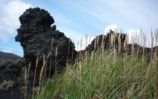 Вулканический камень в траве