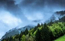 Зеленый лес, туман, облака