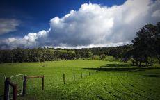 Облака над зеленым полем с деревьями.