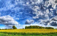 Красивые облака над желтым полем.