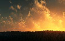 Желтые облака над темным лесом.