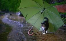 25_Дождь