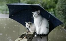 27_Дождь