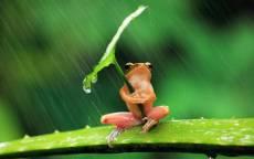6_Дождь