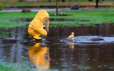 Милая девочка и утенок в дождь