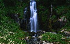Цветочная поляна у водопада