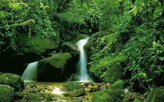 Ручей и водопад в лесу