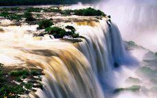 Деревья в большом водопаде