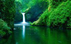 Водопад в зеленом лесу