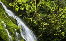Водопад в весеннем лесу