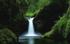 Небольшой лесной водопад