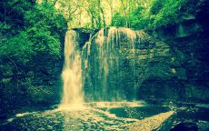 Водопад в зеленом лесу.