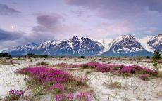 Цветочная поляна у подножия горы