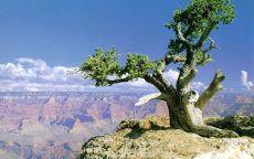 Одинокое дерево в каньоне