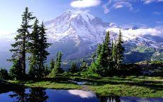 Ели у подножия горы