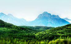 Горы в окружении зеленого леса.