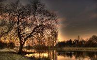 Ива на фоне заката