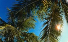 Солнце в пальмовом листе