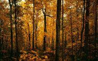 Осенний рассвет в лесу
