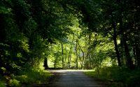 Дорога в лесу утром