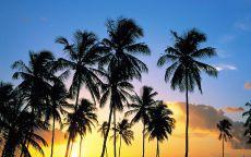 Рассвет в тропиках