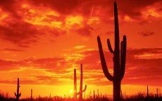 Закат и кактусы
