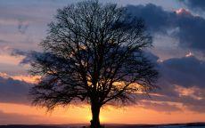 Одинокое дерево и закат солнца