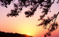 Закат солнца в еловый бор