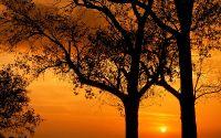 Заход солнца между деревьями