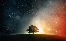 Дерево на фоне звездного неба