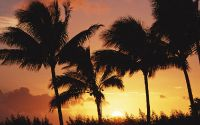 Заход солнца между пальмами
