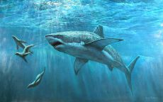 Охота акулы