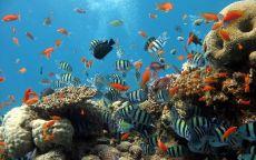 Морские рыбки среди кораллов