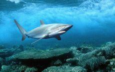 Акула и кораллы