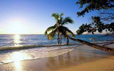 Пальма и дерево на берегу