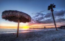 Одинокая пальма на пляже.