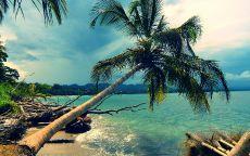 Сломанная пальма на лазурном берегу.