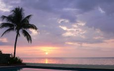 Бассейн с пальмой на берегу океана.