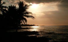 Силуэты пальм на фоне вечернего неба.