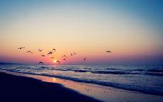 Полет чаек на фоне заката над морем.