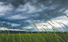 Поле, ветер, тучи, перед дождем