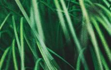Природа, зеленая трава