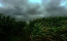 Ветер, зеленая трава, тучи, перед дождем