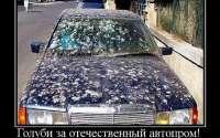 голуби за отечественный автопром