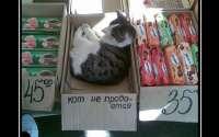 Кот не продается