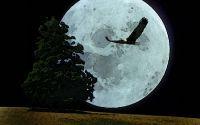 картинка, рисунок, ночь, луна, орел, одинокое дерево