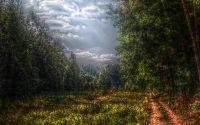 картина, рисунок, лес перед дождем